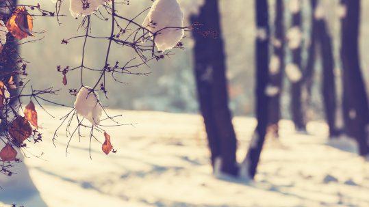 Prendre soin de son bac brun en hiver par la Ville de Rosemère